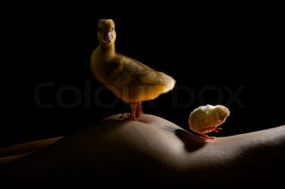 Yellow goose and chicken on the naked female body