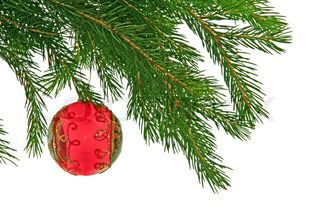 christmas branch of fir-tree with red boll