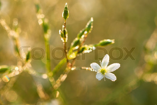 flowers blossoming on a meadow