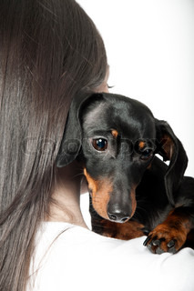portrait of black and brown dachshund on the shoulder of a girl
