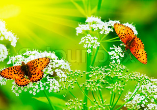 zwei Schmetterlinge trinken Nektar in den Blüten