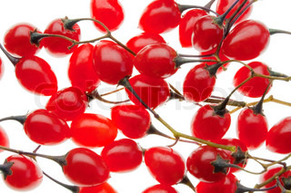 Red poisonous berries of the Nightshade isolated in white