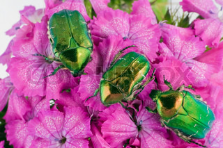 Three emerald gold bugs