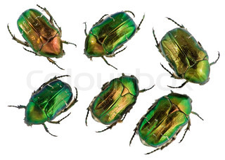 Six emerald gold bugs