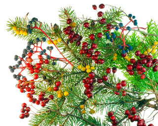 Christmas bouquet from red blue yellow wood berries and fur-tree branches. Isolated on white.