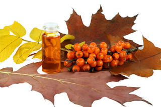 These are ripe orange  of sea-buckthorn berries and the medical oil . Berries ripen in the late autumn, therefore on the image there are yellow and red leaves. Isolated on white.