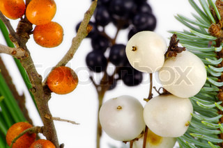 Bright white, orange and black wild wood berries. Some of them are edible, but some poisonous.