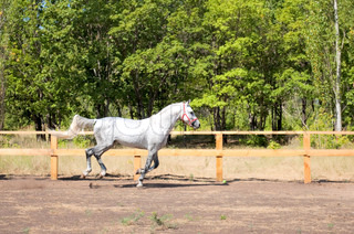 Spotted horse was galloping fast across field along fence