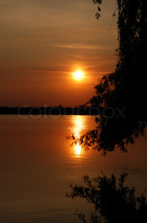 Sunset above water. Growing trees on coast in the form of silhouettes