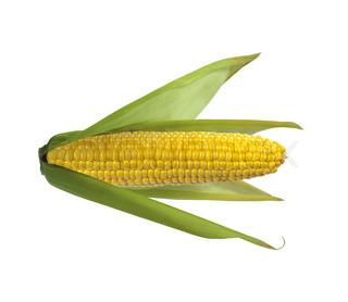 Tasty corn isolated on white background