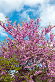 Beautiful blossoming tree in the spring park