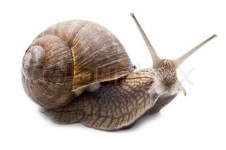 Funny snail isoleret på hvid baggrund