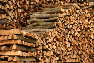wood stack in a danish forest
