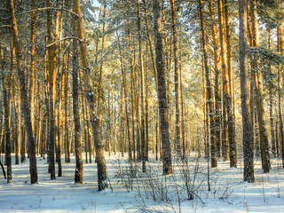 Landscape with winter forest. HDR image