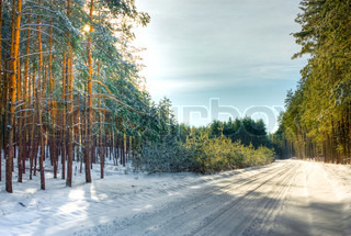 Winter forest landscape on a sunny day. HDR image