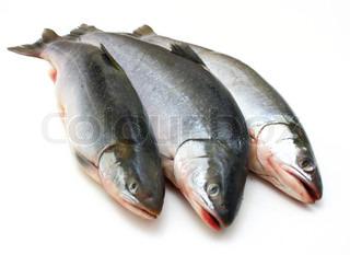 Tre friske hav fisk ligge i nærheden på en hvid baggrund