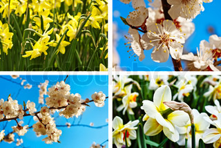 collage fra fire billede med forårsblomster, påskelilje og abrikos