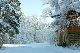 Winter landscape with forest road