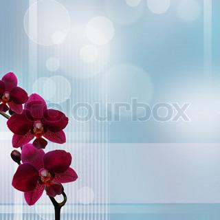 Pink Orchid mod bokeh blå og hvid baggrund