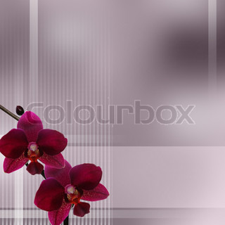 Purple orchid on pastel gradient and  stripes background