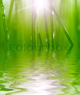 fresh green grass reflected in water