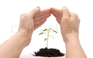 hand roof and plant over white background