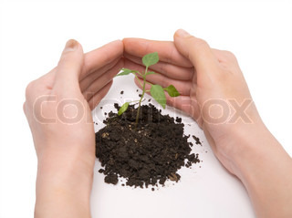 hand roof and young green plant on a white background