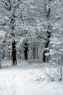 winter trees under white snow, Moscow, Russia