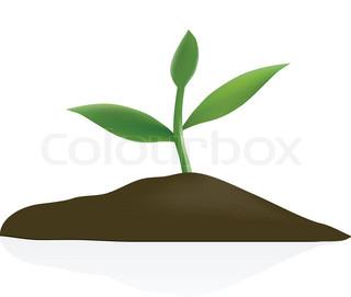 Unge plante i mørke jord isoleret på hvid baggrund