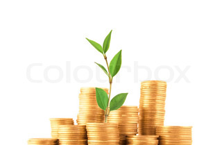 Green plant grow up in golden coins isolated on white. Finance concept