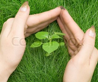 hand protecting plant in grass