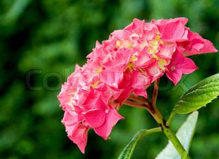 Billede af 'smuk, botanisk, have'