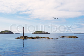 Seagulls on a stone in the Norwegian sea