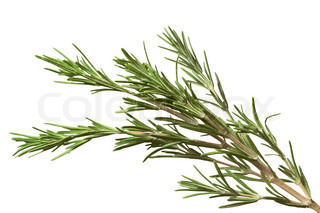 rosemary herb isolated on white background