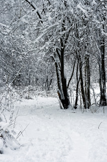forest under white snow in winter, Moscow, Russia