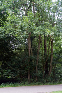 green trees in forest holland