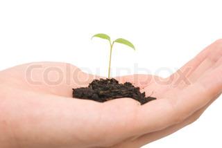 lille plante og overgive hvid baggrund
