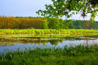 Spring landscape with river and forest