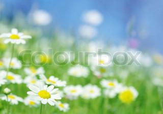 Billede af 'græs, Gennemse, dug'