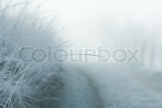 ©Odilon Dimier/AltoPress/Maxppp ; Misty landscape, focus on tall grass in foreground
