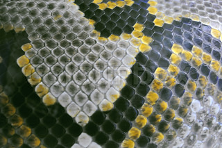 Abstract background - snake skin