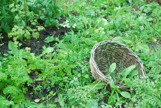 ©Sigrid Olsson/AltoPress/Maxppp ; Wooden basket on the ground surrounded by chervil