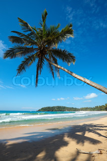 Tropiske paradis idyllisk strand med palme.