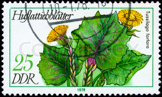 GDR - CIRCA 1978: A Stamp shows image of a Coltsfoot with the designation