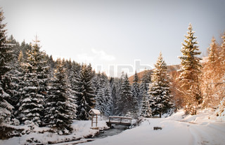 Winter fir-tree forest with snow covered trees and path