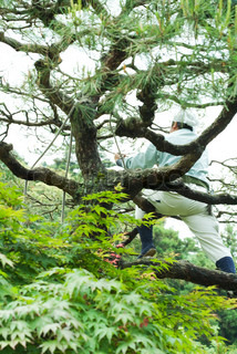 ©Laurence Mouton/AltoPress/Maxppp ; Gardener sitting in tree, low angle rear view