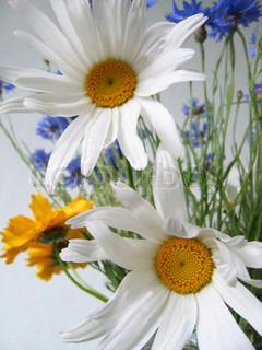 buket blomster (kamille, kornblomst, coreopsis)
