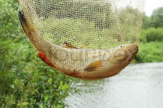 Catching fish in fishing net on a beautiful river background