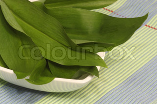 Fresh wild garlic herbs on beautiful dishware