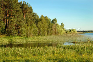 Evening at a rural small lake and a green forest